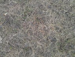 Grass texture1 by RedStyleOfficial