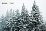 Trees in the White Mist by confucius-zero