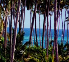 Palm Trees Ocean View by BachLynn23