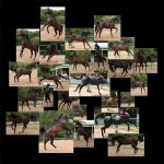 Horse Stock - 'Mis'behaving by WeavingMagic