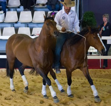 STOCK - 2014 Total Equine Expo-120 by fillyrox