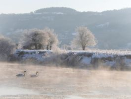 Icy swans by nectar666