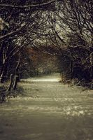 Lost Locations: Winter Woodland by DocileGloom