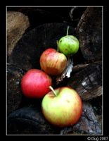 Apples 05 by dugonline