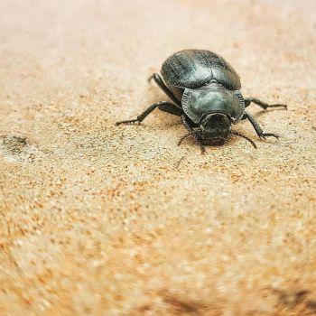 beetle in Morocco by BenHeine