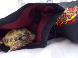 Turtle in robe by LeaWer