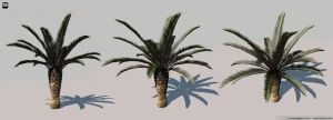 Palm Tree by Yakul