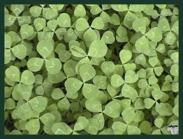 clover by foodnphotos