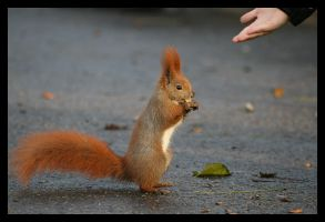 Behold... The Squirrel. by squirrelhollow