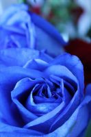 Roses Are Blue by Theshortyetevildork