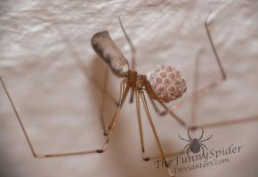 Female Pholcus phalangioides with her eggs by TheFunnySpider