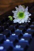 keyboard and a flower by a6-k