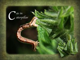 C as in Caterpillar by 3punkins