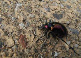 A Beetle on the ground by Scorpini-Stock