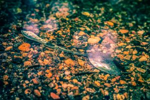 A Fork in the Road? No, a Spoon in the Creek by CHabio