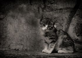 Urban Cat by VikingCamel