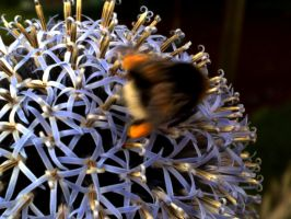 Fast Bumble-Bee by ViperHost