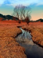 A stream, dry grass, reflections and trees by patrickjobst