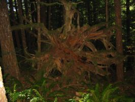 Twisted Roots by slixtersix
