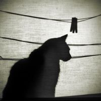 Cats things by haur