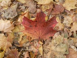 Autumn Leafs 05 by Fea-Fanuilos-Stock