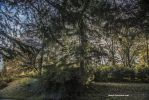 Parilly park by Aneede
