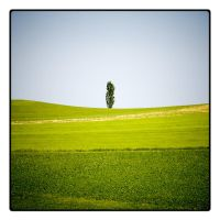 gruener baum by fade-out