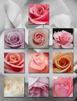 iPad Wallpapers - RosesCloseUp by freyiathelove