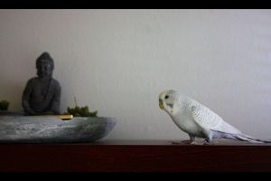 The Bird and the Buddha by fokushii