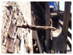 Rusty Nail by DaSef