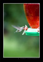 Liquid bird feed by rpieratt