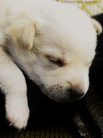 my little puppy by Cullenowa