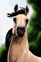 Horse by Claire-Lacaes