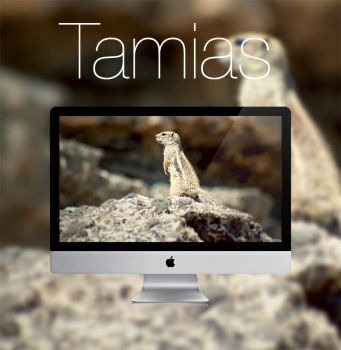 Tamias HD Wallpaper by infernoragazzo