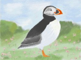 Puffin in the wild by VATalbot