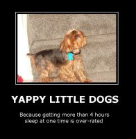 Truth About Yorkshire Terriers by blackmariah27