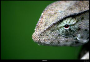 Chameleon by Exitialis