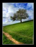 Follow the path, Find the Tree by ShanKnow