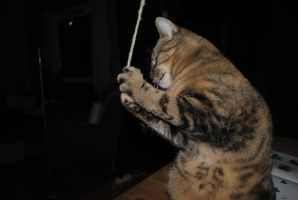 Must eat the rope! by CaprySonne