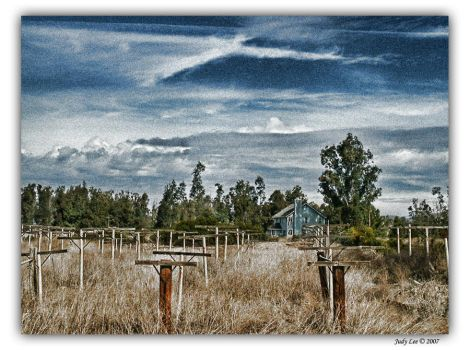 Vineyard Home by osagelady