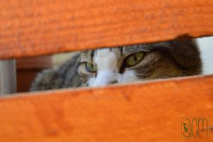 Cat Eyes par Allison Christine Martines by FROG-and-TOAD
