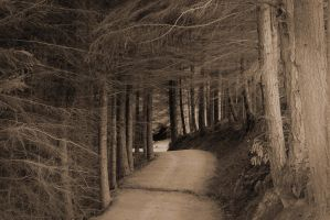 Pines of Old by ARC-Photographic