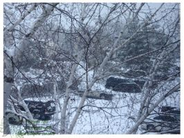 2010 5-6 02 Snow Pictures 03 by lilly-peacecraft