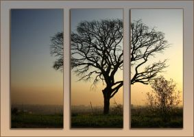 Tryptych For Fun a Tree by Sumidha