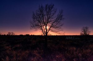 Sunset tree by carnedepsiquiatrico