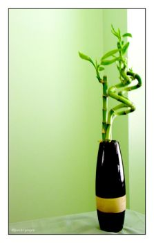 Lucky Bamboo by sweetpmpm