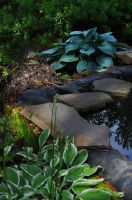 Shadows In the Pond by Quarion-Design