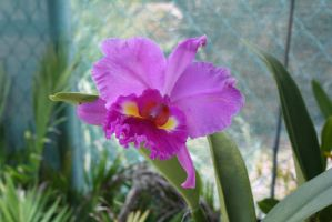 Orchid 3235 by fa-stock
