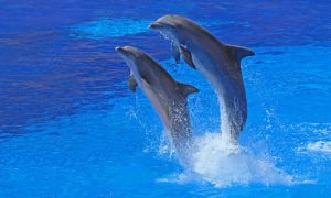 Dolphins 005 by neverFading-stock