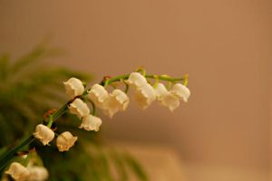 Muguet by glad2626